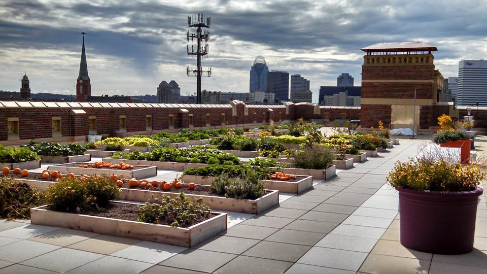 The Rothenberg Rooftop School Garden